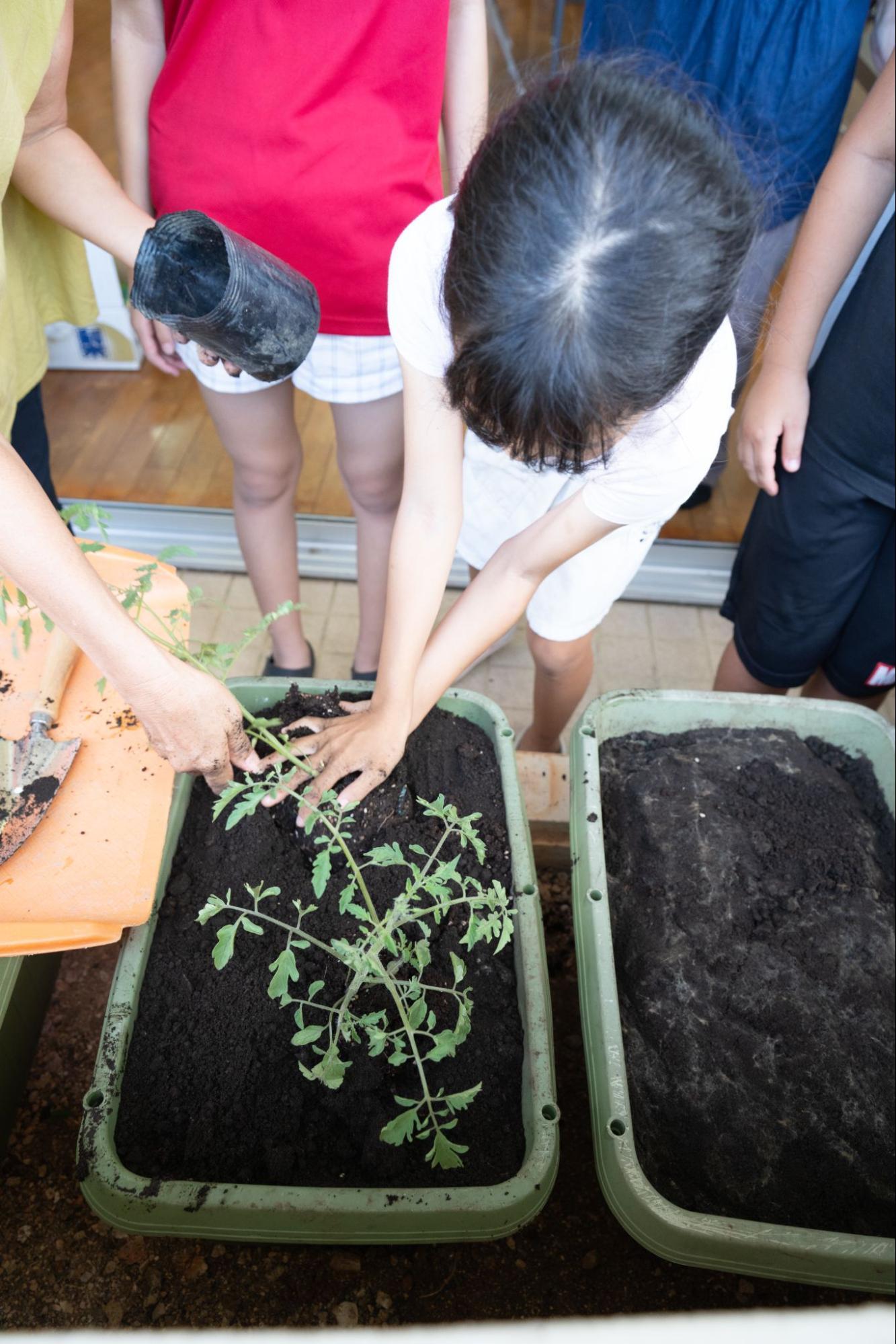 子どもたちといっしょに野菜を植えました!